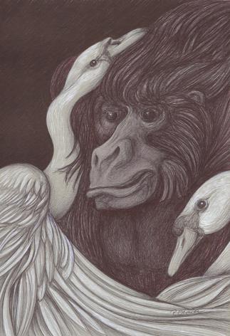 Gorille schwäne