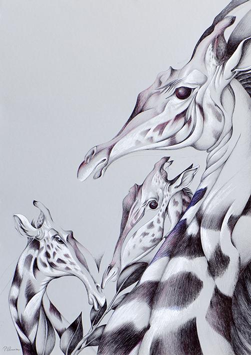 Les girafes - 70x50cm -