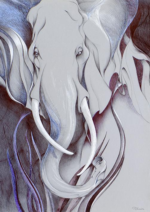 Regard d'éléphant